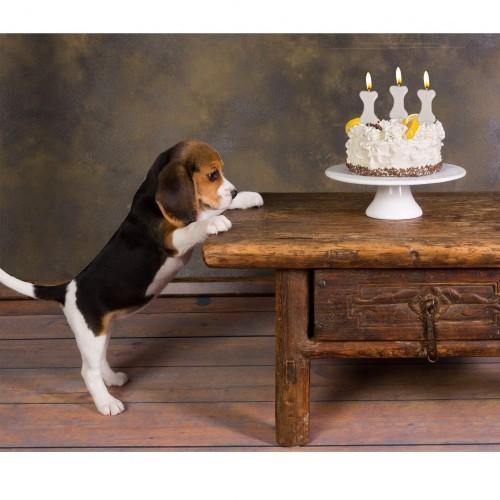Candeline Torta per Festa Compleanno Cane Sagomate a Forma di Osso, Party di Auguri di Buon Compleanno per Il Tuo Amico a Qua