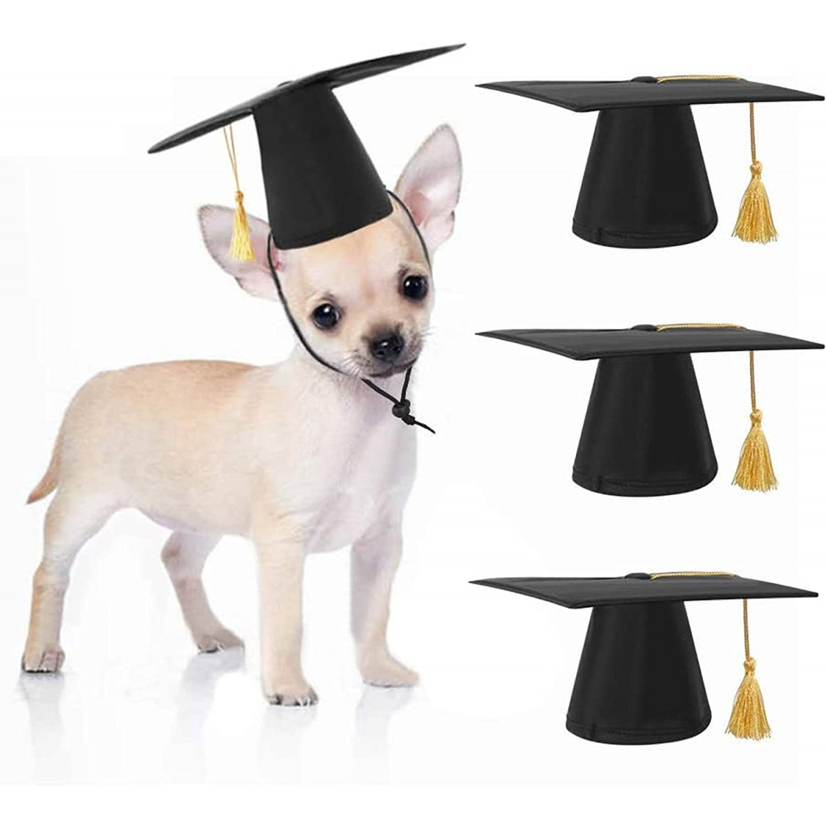 Set 3 cappelli laurea per cani, simpatici resistenti